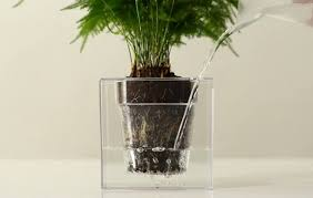 office pot plants.  plants the boskke cube is a selfwatering plant pot that has an inbuilt reservoir  and u0027sloflou0027 internal irrigation system supplies plants with up to 4  on office pot plants