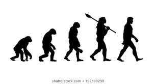 Evolution Of Man Chart Human Evolution Photos 44 512 Human Stock Image Results