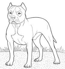 Small Picture German shorthaired pointer coloring page from Dogs category