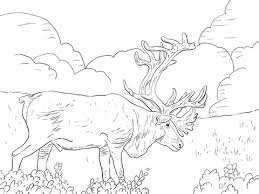 Small Picture Porcupine Caribou or Grants Caribou coloring page Free