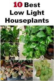 low light indoor plants