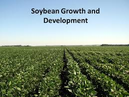 Soybean Growth And Development Ppt Video Online Download
