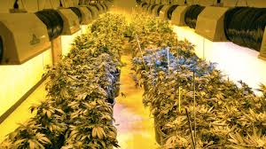 basement grow room design. Marijuana Grow Room Basement Design M