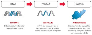 mRNA Platform: Drug Discovery & Development - Moderna