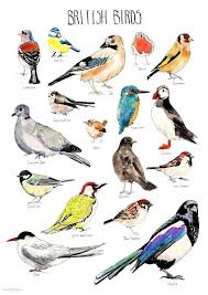 Birds Poster Featuring The Digital Art Alphabet Of By Wolf