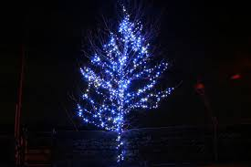 christmas lights outdoor trees warisan lighting. Fabulous Blue Plus Outdoor Lights Warisan Lighting N In Xmas Christmas Trees I