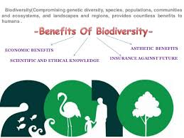 importance of biodiversity to humankinds biodiversity compromising