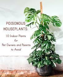 cat safe plants australia pet friendly archives leaf and paw pet safe plants australia five minimalist houseplants