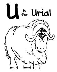 U Urial edited 1