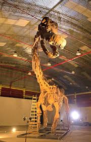 「Titanosaurus found 」の画像検索結果