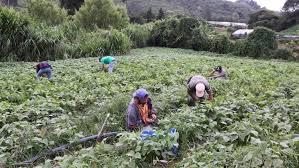 Resultado de imagen para empresas de agricultura