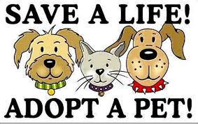 Image result for animal shelter clipart
