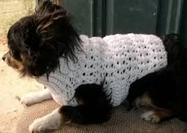Free Crochet Dog Sweater Patterns Custom Small Dog Crochet Sweater Patterns Crochet And Knit