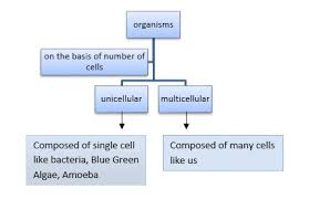 Ch 8 Cell The Unit Of Life Biology For Medical Entrance