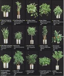 tropical office plants. Plants Catalogue Tropical Office