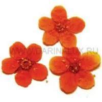 <b>Сухоцветы</b> оранжевые купить в Москве |NEOPOD