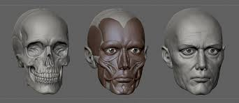 face anatomy artstation face anatomy study ali farsangi