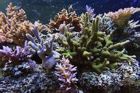 Znalezione obrazy dla zapytania koralowiec