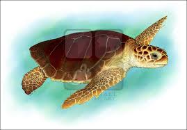 Small Picture Loggerhead Sea Turtle Caretta caretta Line Art and Full Color