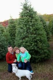 Christmas tree tagging pilgrimage part of family's celebration | Reading  Eagle - SECTIONS