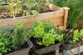 planning and planting an herb garden