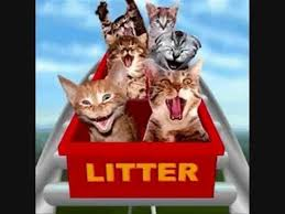 THE CATS CATURDAY ROLLER COASTER - YouTube