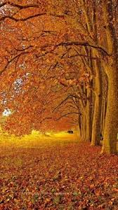 a fall day perfect for a promenade within mother s nature perfection beauty to