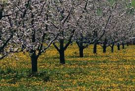 Most Popular Nut And Fruit Trees At Mossy Oaku0027s Nativ NurseriesFruit And Nut Trees