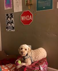 an interview johnny marr rescue dog thecrassceiling sari so did you know you re d after the guitarist johnny marr