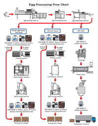 Egg Processing Flow Chart