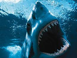 shark hd backgrounds abyss hd background id 4947 1024x768 animal shark