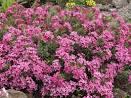 Цветущие кустарники для сада фото название