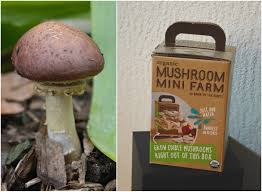 Kitchen Garden Mushrooms Cooking For Kishore In My Kitchen June 2015