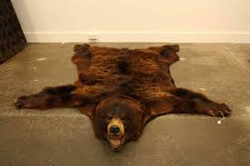 a brown bear skin rug with full head in excellent condition