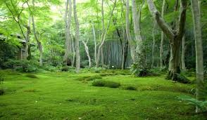 Cool Forest Backgrounds WallpaperPulse