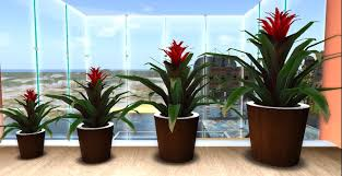 Round Darkwood2 Potted Tropical Plant 1 ***PROMO PRICE***.  Round_darkwood2_potted_tropical_plant_1_001  Round_darkwood2_potted_tropical_plant_1_002 ...