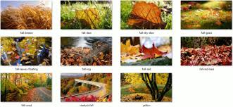 Windows Fall Theme Download Autumn Leaves Theme For Windows 10 8 And 7
