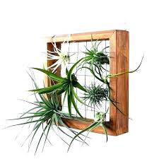 post diy air plant wall hanger air plant wall display air plant wall art air wall mounted air plant