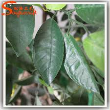 261 Best Bonsai Images On Pinterest  Bonsai Trees Plants And Hybrid Fruit Trees For Sale