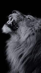 Black Lion Wallpaper 1080p » Hupages ...