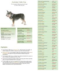 Cattle Dog Weight Chart Pin On Puppy Man
