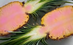 Image result for pink pineapple plant