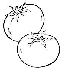 tomato clipart black and white. New Pages Design Printable Sheet Best Of In Tomato Clipart Black And White