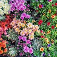 30 Best Fall Flowers for an Autumn Garden - Prettiest Flowers to Plant in  the Fall