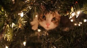 Les beaux sapins de Noël Images?q=tbn:ANd9GcTp4hNZ7L4pzCzTmPw-URwTEbw_KcRETy-TWQyJXIHKu4jEcuDS