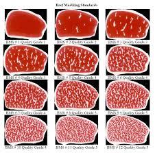 Beef Grades Chart I Love Bello Shire