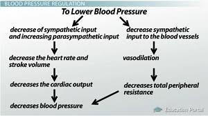 Regulation Of Blood Pressure Short Term Regulation