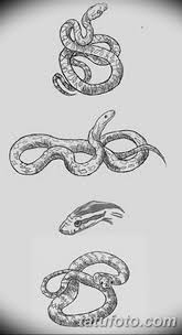 черно белый эскиз тату змея 11032019 004 Tattoo Sketch