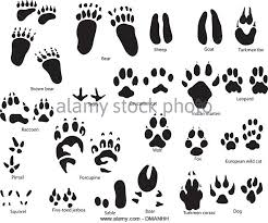 Cat Paw Print Drawing At Getdrawings Com Free For Personal