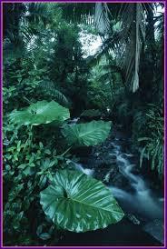Astonishing Rainforest Fototapeter U Tapeter Photowall Lovelife Pic